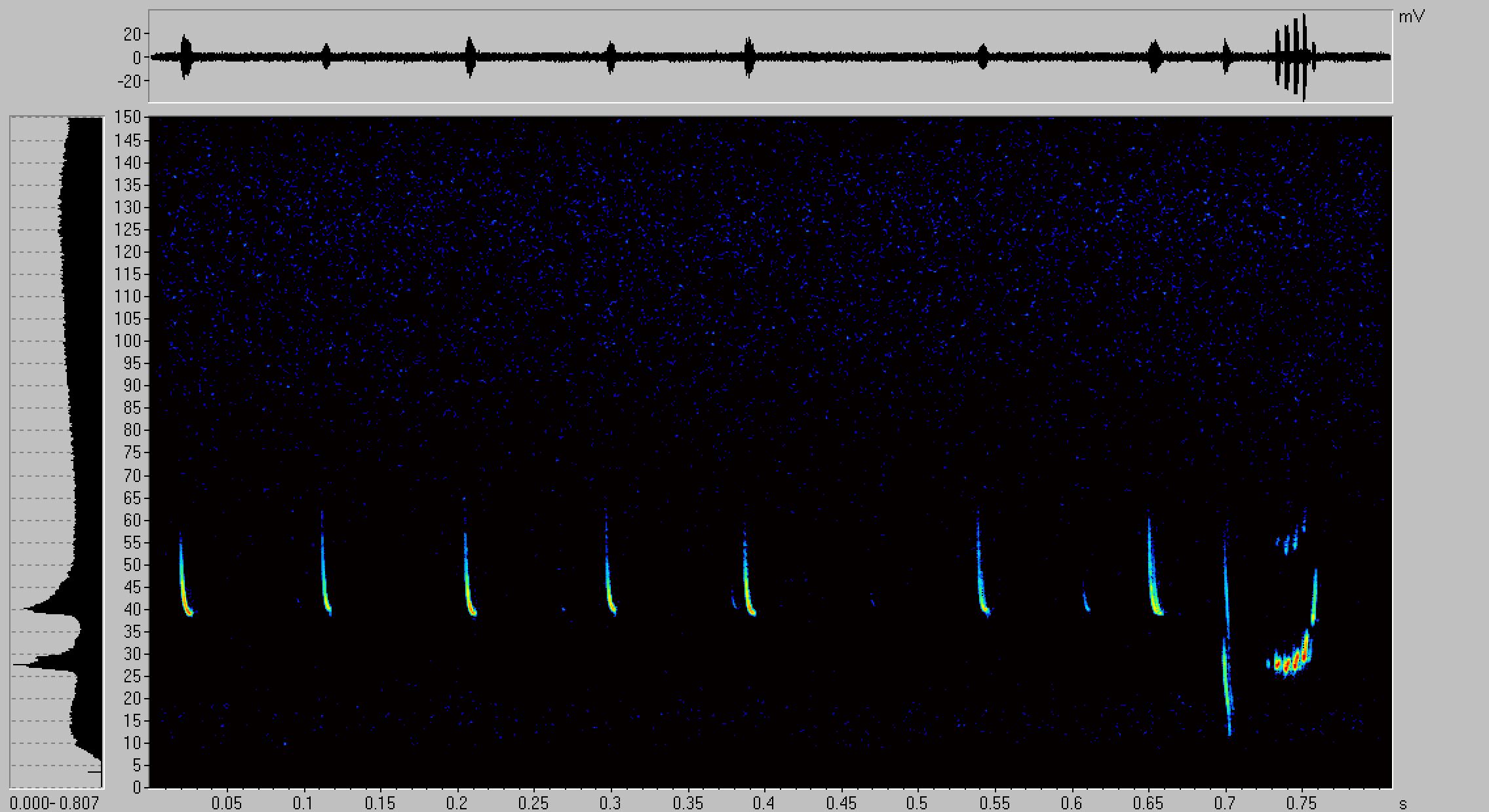 Abb. 7: Rufsequenz einer Rauhhautfledermaus
