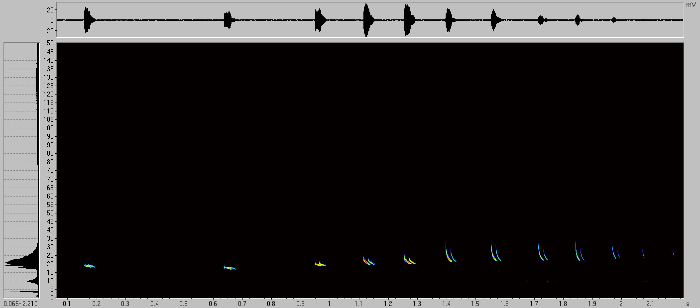 Abb 8: Typische Rufsequenz eines Abendseglers
